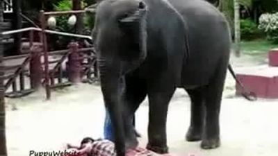 Man was crushed by elephant