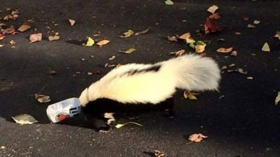 Animal gets stuck in beer can