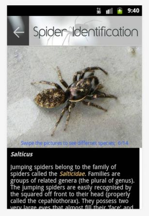 A new spider ID app