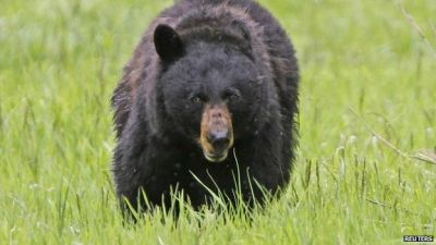 Bear kills student in nature preserve