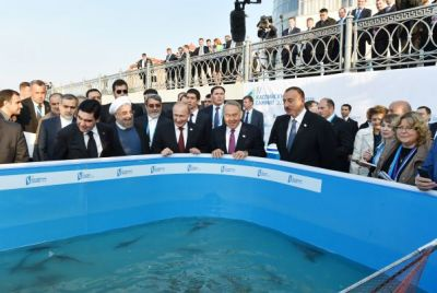 The heads of the sates attended a ceremony to release belugas bred in Astrakhan into the Volga