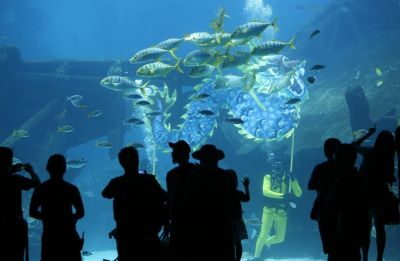 Moscow to get Europe's largest oceanarium in 2015