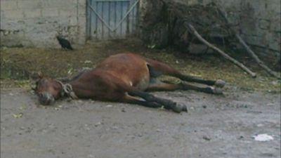 Elektrik cərəyanı atı öldürdü