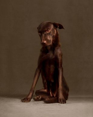 Photograph's portraits of dogs on the day they were put down are utterly heartbreaking PHOTO