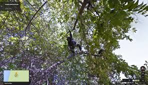 Google Streetview gives glimpse of the world of Jane Goodall's chimpanzees VIDEO