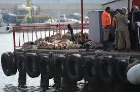 At least 24 migrants die as boat sinks in Black Sea near Istanbul