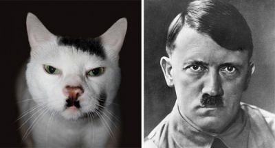 Pictures of cats that like famous people