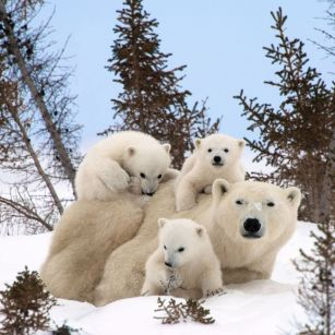 Happy animal families PHOTO