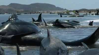 200 whales rescued