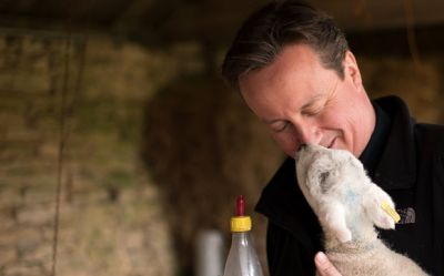 Cameron kisses a lamb  PHOTO