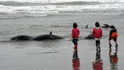 130 dolphins beach