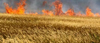 18 hektar taxıl sahəsi yandı