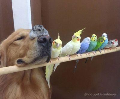 В Бразилии собака живет с хомяком и стаей попугаев - ФОТО