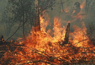 В Сибири горят 50 тысяч гектаров леса