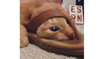 Кот застрявший в тапочке