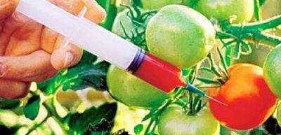GMO bitkilərə qarşı araşdırma