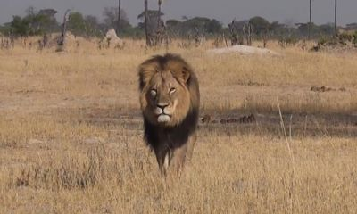 Some US airlines ban shipment of hunting 'trophies'