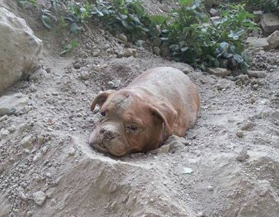 Police arrested man who buried a dog alive