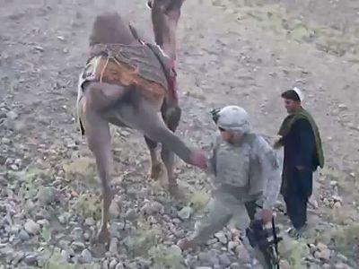 Американского солдата в Афганистане избил верблюд