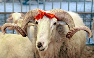 Fairs for sale of sacrificial animals in Baku: Addresses revealed