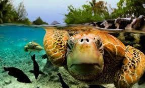 Девушку арестовали за катание на морской черепахе