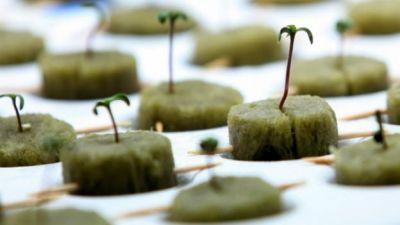 Первый марихуановый курорт в США