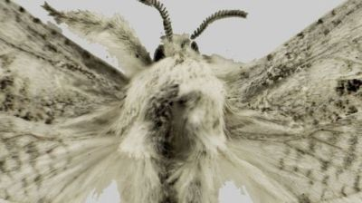 eBay hosts moth-naming auction