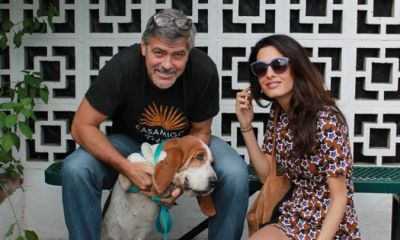 George and Amal Clooney adopt basset hound