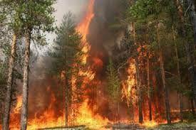 На территории Шахдагского национального заповедника произошел пожар