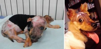 Puppy  boiled alive and thrown from 4th floor window after chewing owner's phone