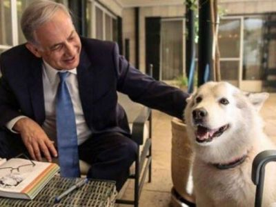 Israeli Premier's dog bites visitors