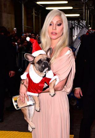 Леди Гага приехала на церемонию с женихом, бабушкой и собаками ФОТОГРАФИИ