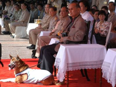 Man may go to prison for Insulting king's dog