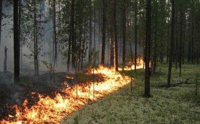 Hacıqabulda 180 Eldar şamı yandı