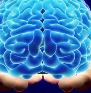 İnsan beyin 24 yaşında daha yaxşı işləyir