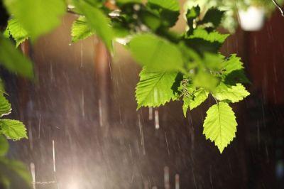 Завтра вновь будет дождливо