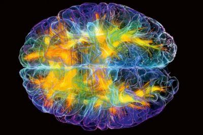 """İnsan beynində """"intuisiya mərkəzi"""" aşkarlanıb"""