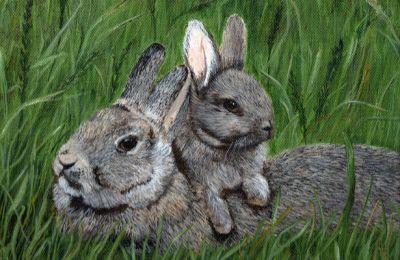 Ana dovşan hər kəsi heyrətləndirdi VİDEO