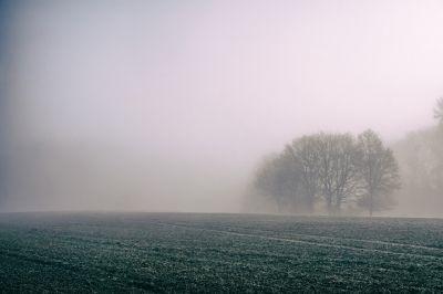 Ожидается туман и изморось