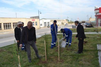 Siyəzən rayonunda ağacəkmə kampaniyası keçirilib