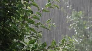 В выходной день пойдет дождь